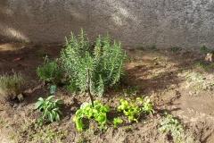 le nostre piante basilico, rosmarino e timo